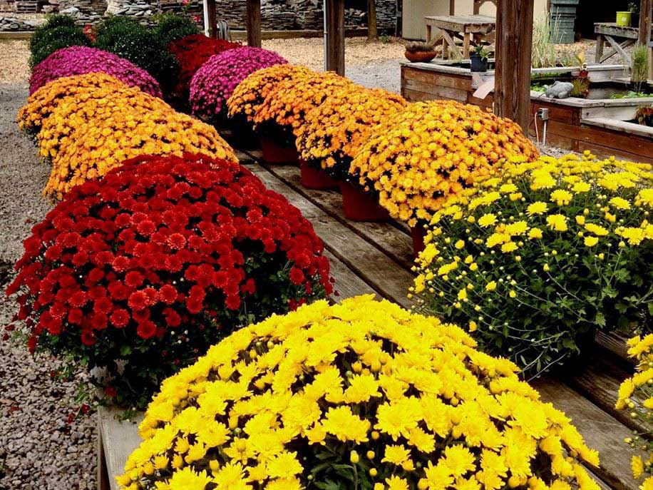 Northern Virginia Garden Centers