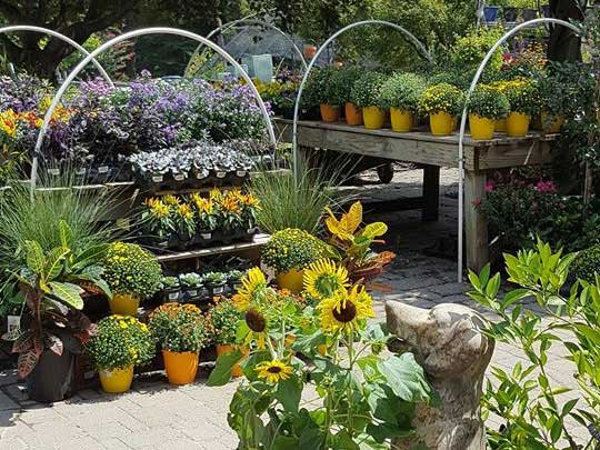 contact mendham garden center garden landscape farm - Mendham Garden Center