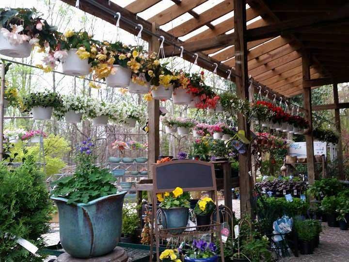 Virginia Plant Nursery Thenurseries