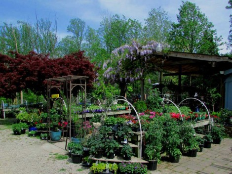 Fair Oaks Nursery