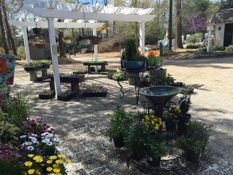 Landscaping Nursery