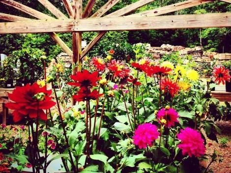 Plant Nursery Alexandria VA
